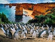 HISならではのお値打ち価格! 即OK!【セットで更にお得!】グレートオーシャンロード・エクスプローラー & ペンギンパレード