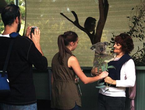 【日本語】パースで唯一コアラ抱っこのできる動物園★コフヌコアラパークツアー (フリーマントル下車)