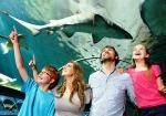 シドニーの水族館 オプショナルツアー