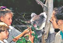 アデレードの動物 オプショナルツアー