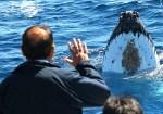シドニーのクジラウォッチング オプショナルツアー