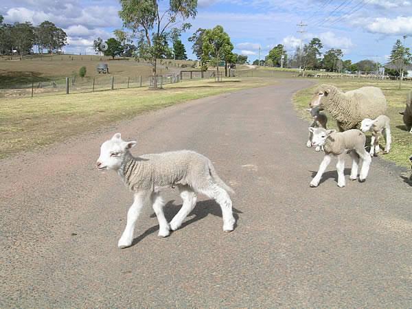 シドニーのトブロック牧場体験  オプショナルツアー