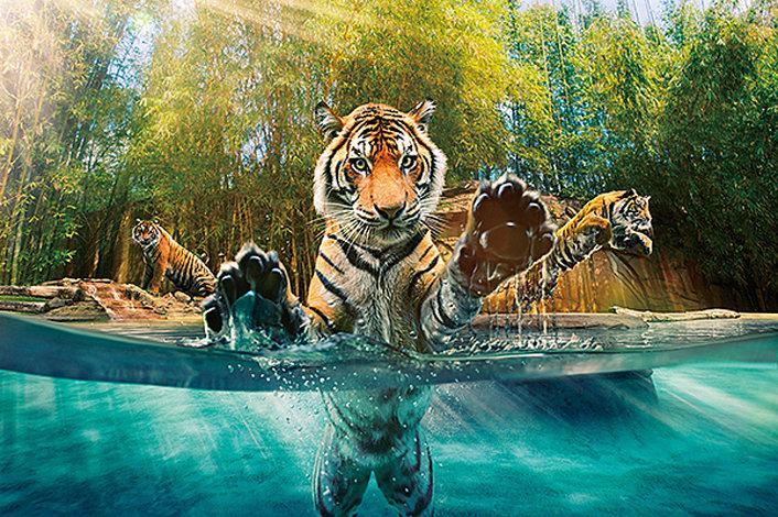 ゴールドコーストの動物園 オプショナルツアー