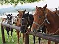ゴールドコーストの乗馬 オプショナルツアー