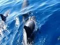 シドニーのクジラ、イルカウォッチング オプショナルツアー