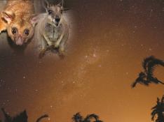 満天の星空見学とワイルドアニマルウォッチング(夕食つき)