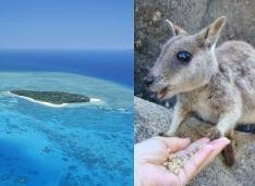 グリーン島+どきどき動物探検ツアー(お迎え付きプラン/ケアンズ市内主要ホテル⇒リーフフリートターミナル)
