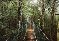 世界自然遺産ラミントン&マウントタンボリン観光 【ランチなしコース】