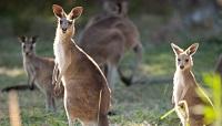 【コアラ割りゴールデン キャンペーン】世界遺産土ボタル&野生動物探検エコサファリツアー