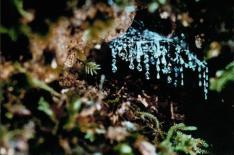 【コアラ割りゴールデン キャンペーン】世界遺産 土ボタルツアー日本語ガイド