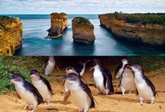 【GREAT SIGHTS】【セットで更にお得!】グレートオーシャンロード・エクスプローラー & ペンギンパレード